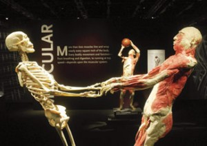 display at the Bodies the Exhibition