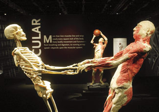Nov 27,  · The Real Bodies Exhibit was absolutely fabulous! It was beyond love at first site for me! To see the human form in this context was totally amazing! Definitely an exhibit I would go through again and again!!!! S. Las Vegas Blvd., Las Vegas, NV View the map. Guest Reviews.5/5(5).